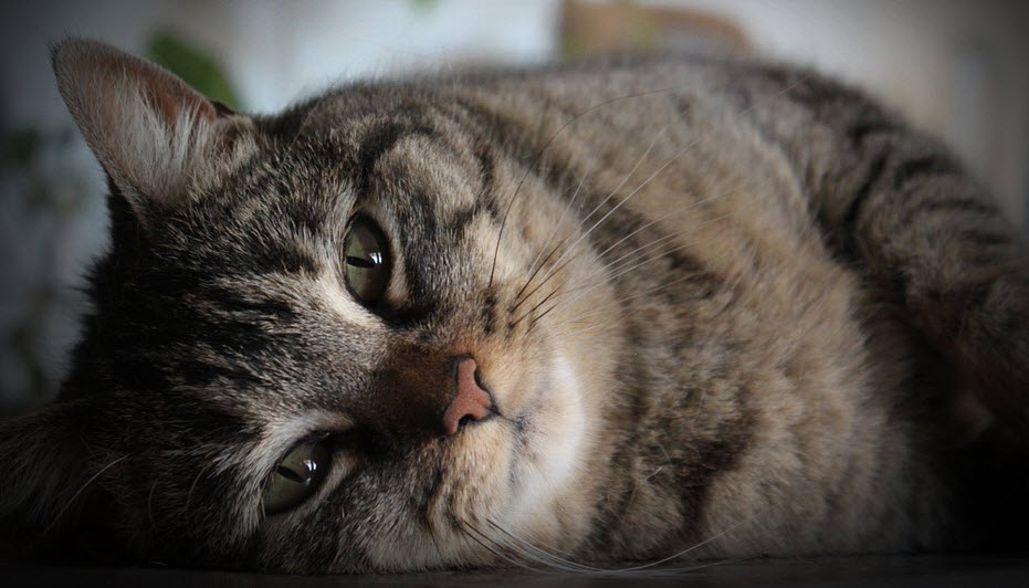 Cat resting Reiki